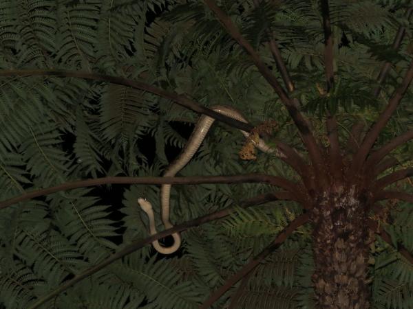 amethyst python 4.0_1