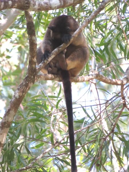 tree-kangaroo feet