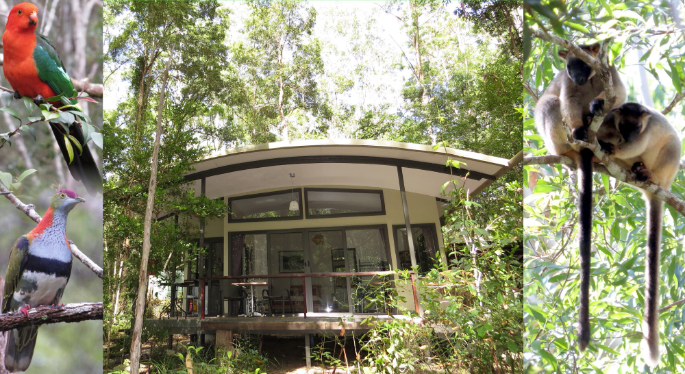 atherton tablelands birdwatchers cabin
