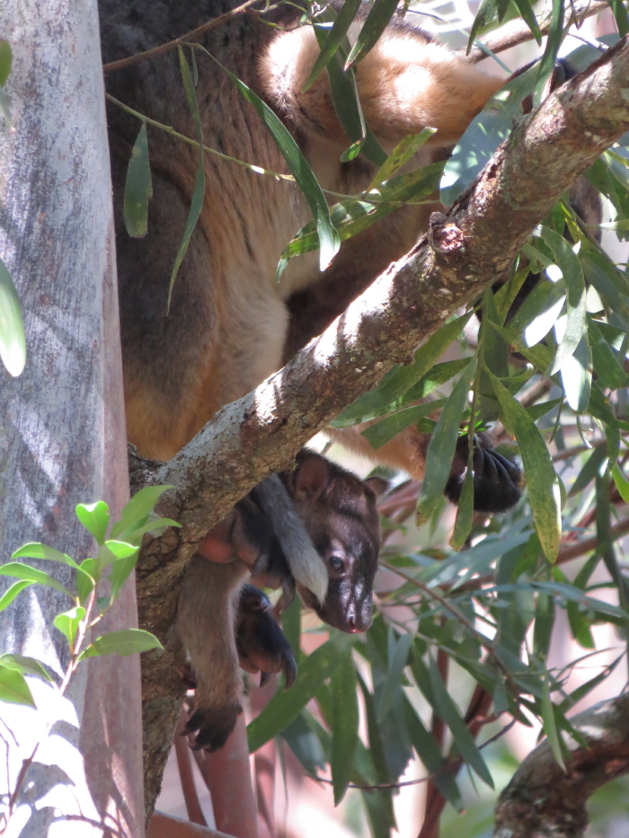 Tree-roo baby in pouch